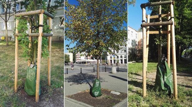 Treegatory chronią młode drzewa Miasto Stołeczne Warszawa/Facebook