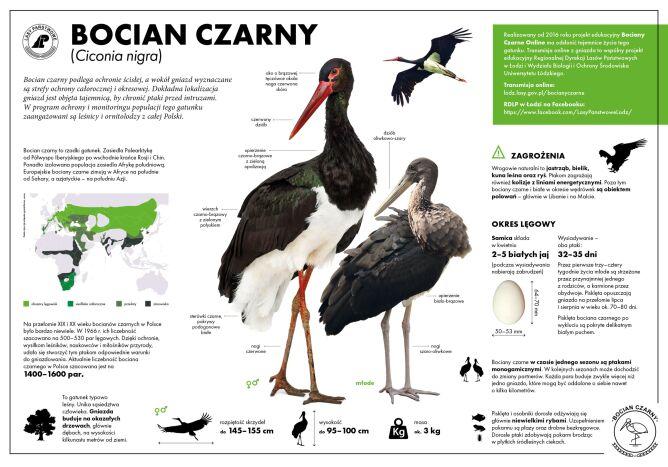 Bocian czarny (Lasy Państwowe)
