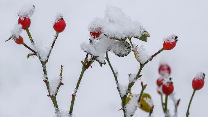 Prognoza pogody na dziś: pochmurna środa. Miejscami poprószy śnieg