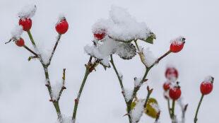 Prognoza pogody na jutro: zimno, pochmurno, lokalnie śnieg